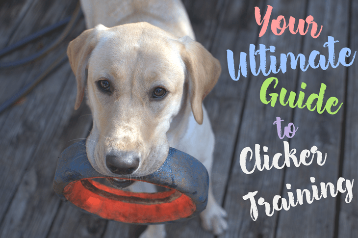 The ultimate guide to clicker training