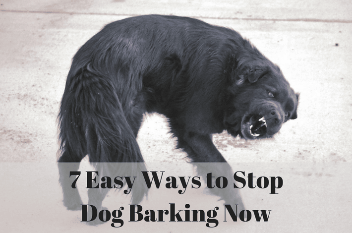 7 Easy Ways to stop dog barking
