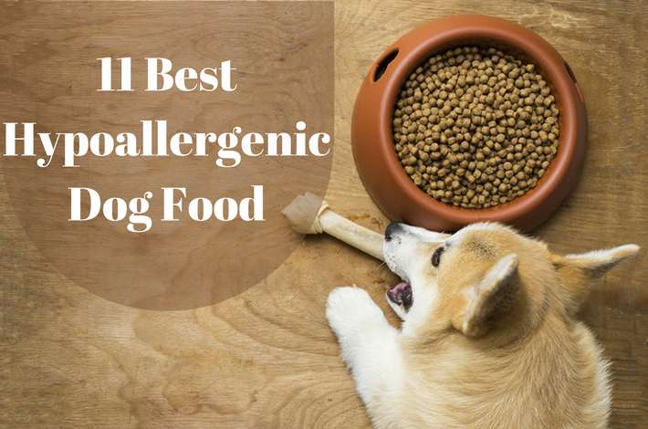 11 Best Hypoallergenic Dog Food