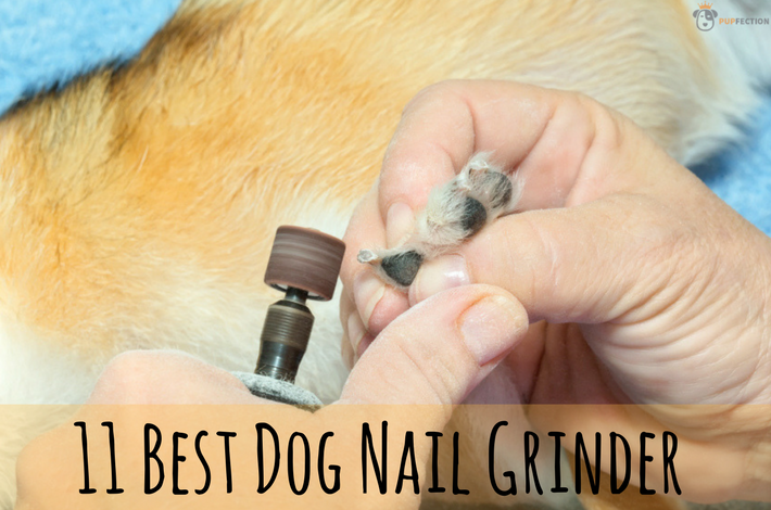11 Best Dog Nail Grinders 2017 [Buyers Guide] - Pupfection