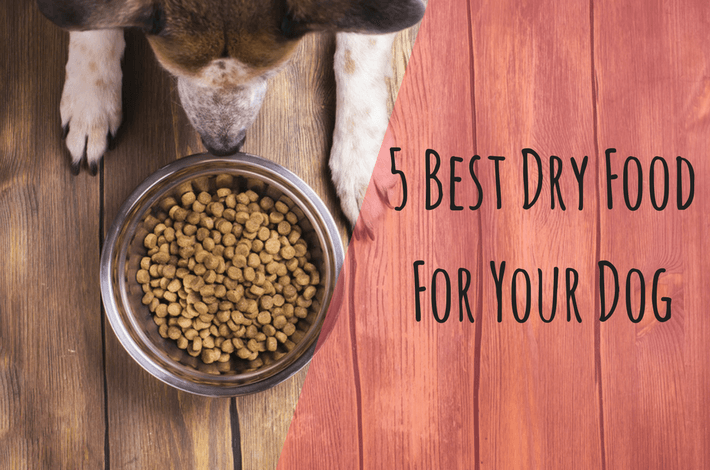 best dry food for you dog
