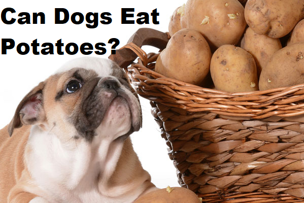 Can A Dog Eat Potatoes