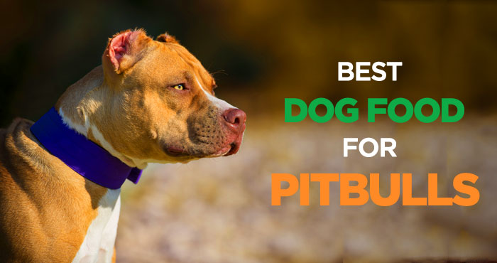 Best Dry Dog Food For Pitbull Puppies Review Pupfection