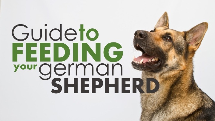 Best Food For German Shepherd Puppy Review Pupfection
